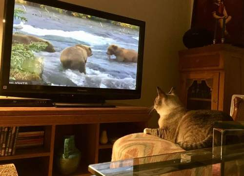 MM watchin bears.jpg